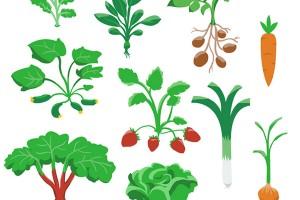 groente_gamefoqus_petra_van_berkum